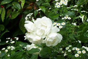 Картинка цветы разные вместе белый