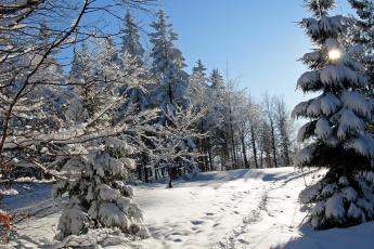 Картинка природа зима лес снег