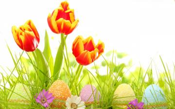 обоя праздничные, пасха, тюльпаны, яйца
