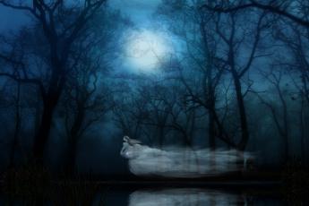 обоя фэнтези, призраки, ночь, лес, фантом, привидение, призрак, ghost