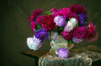 обоя цветы, астры, разноцветные
