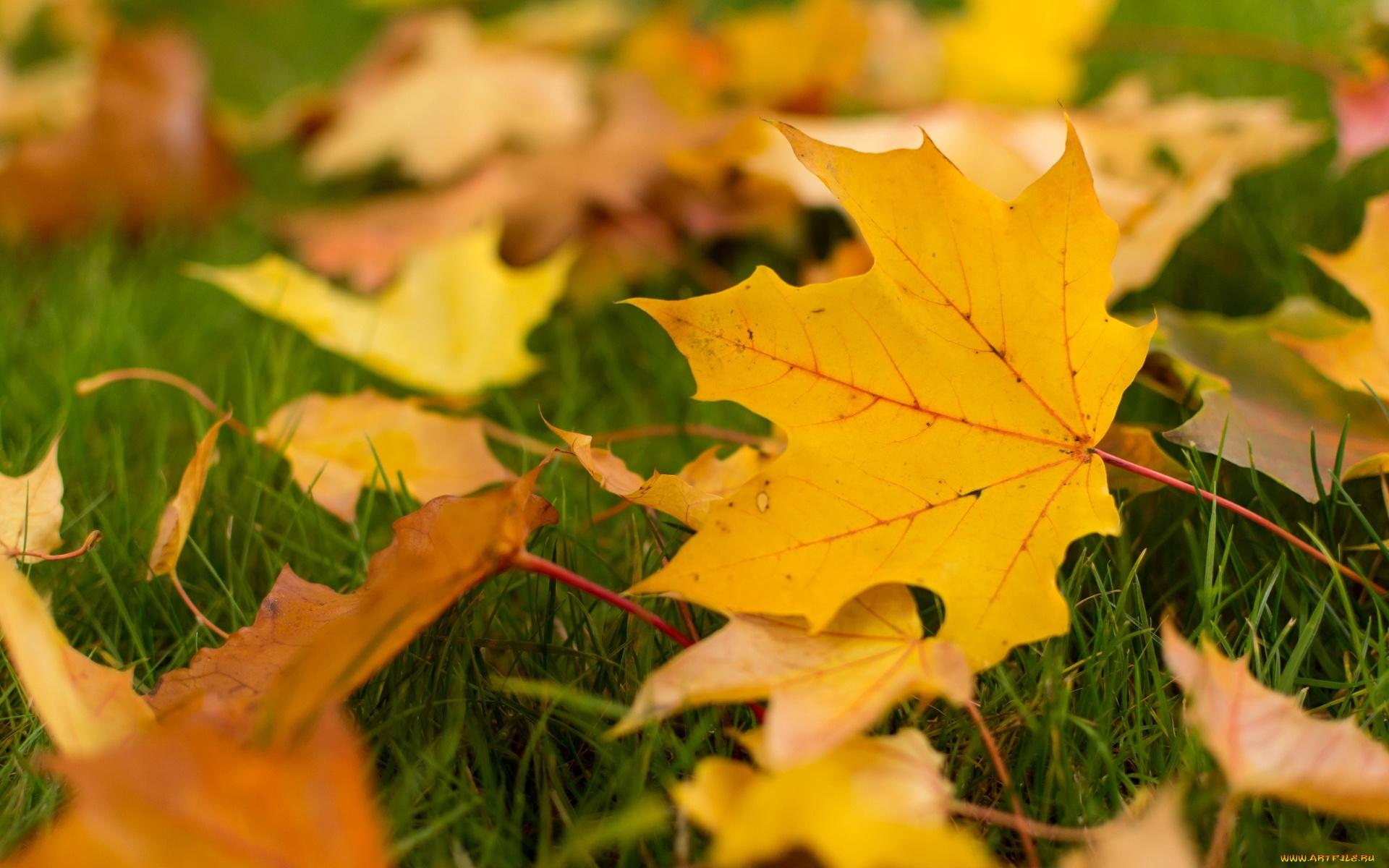 Картинка с желтыми листьями