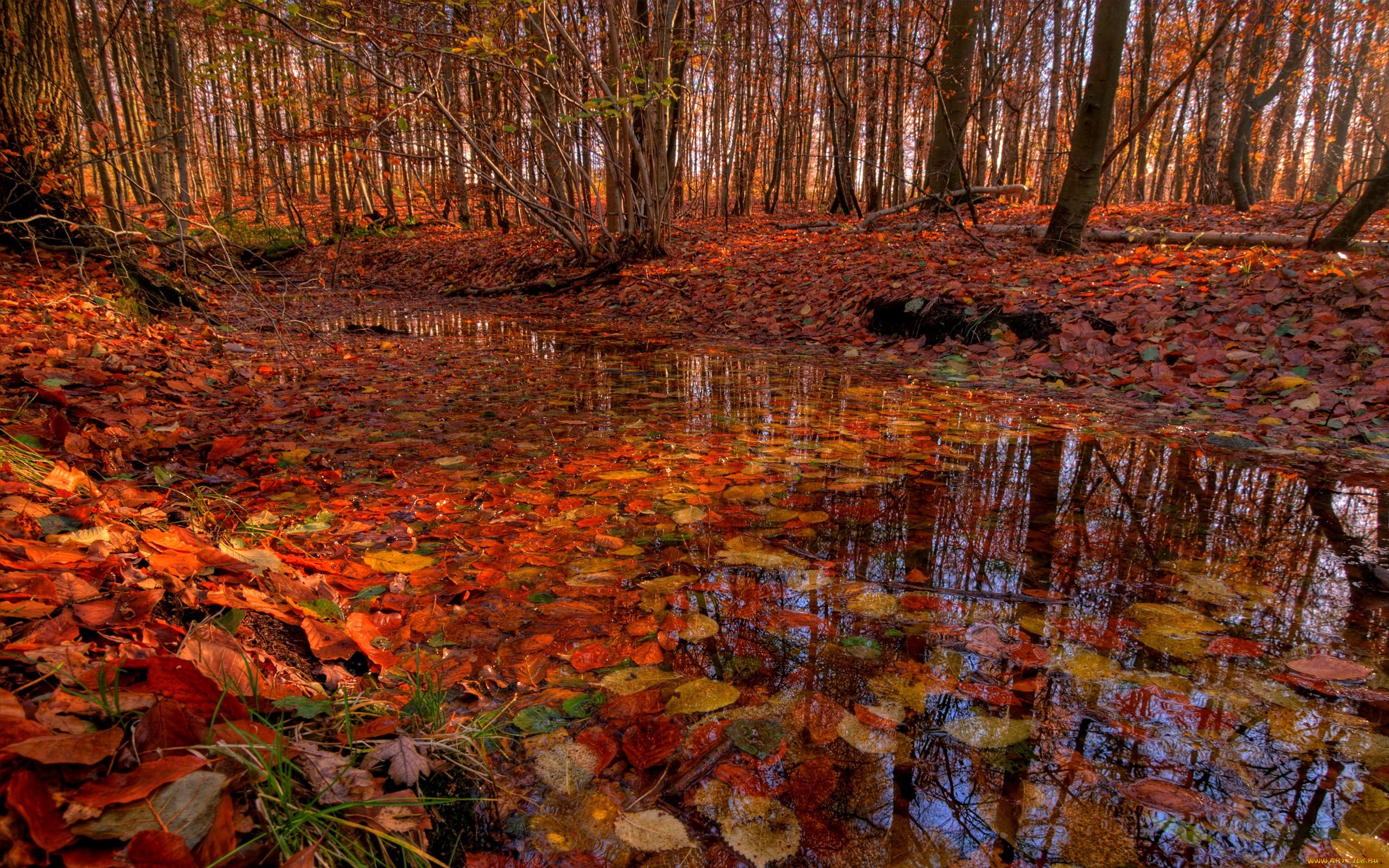 Осенний лиственный лес  № 3193607 без смс