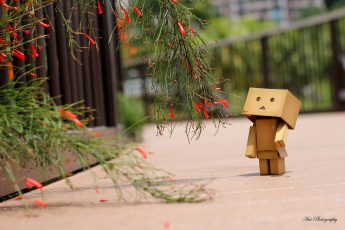 Картинка разное данбо danboard цветы коробочка игрушка милый