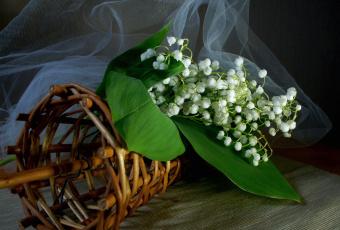 Картинка цветы ландыши белый