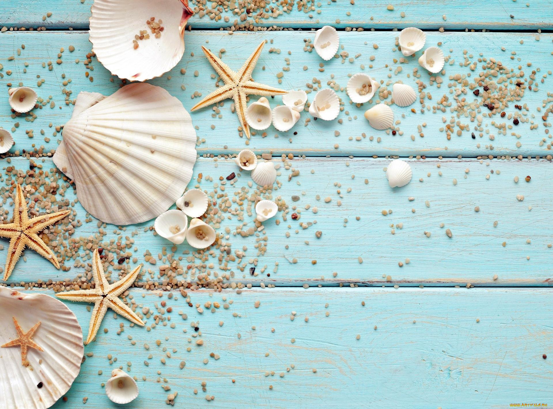 природа украшения морская звезда раковина без смс