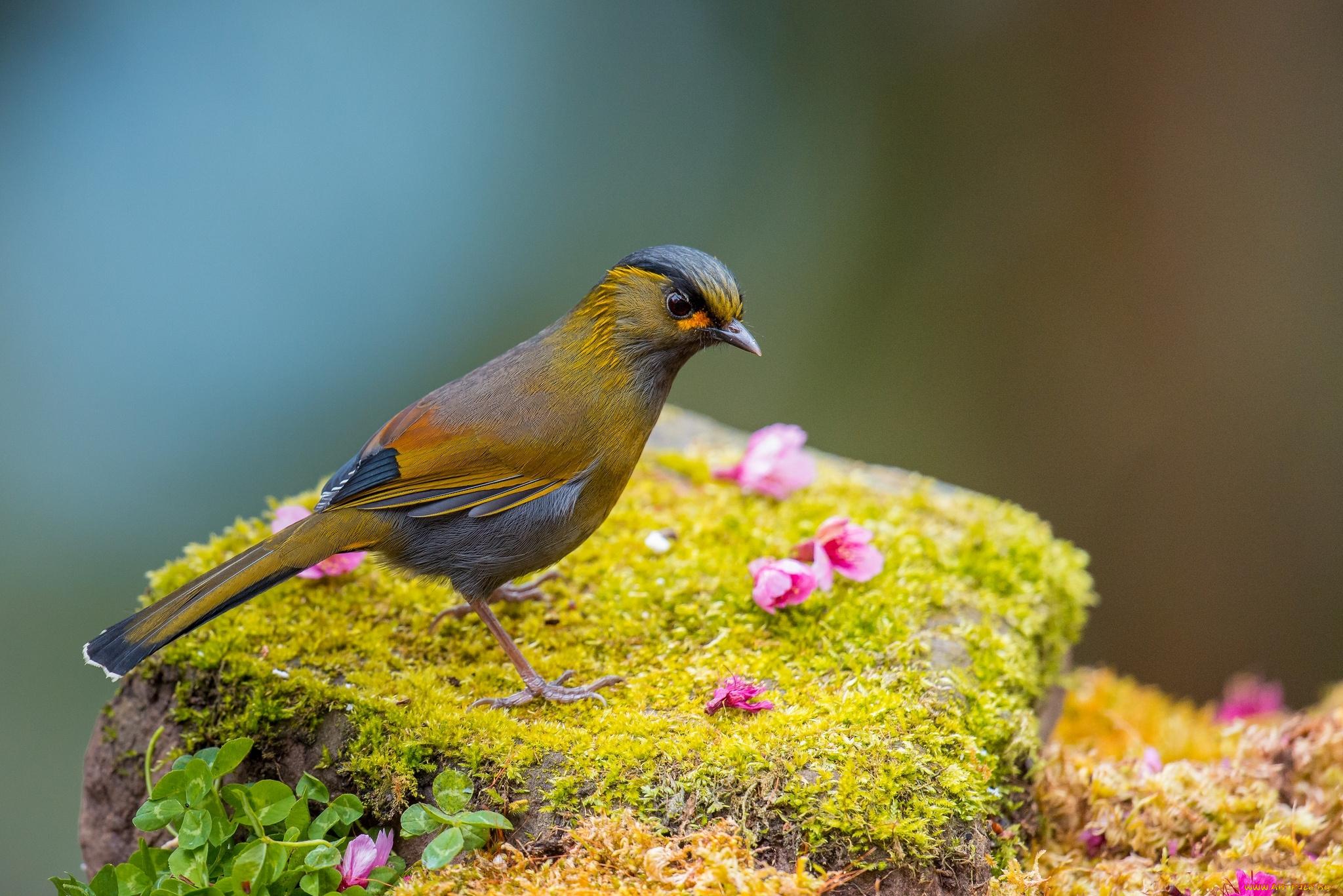 Желтая птичка на мхе бесплатно