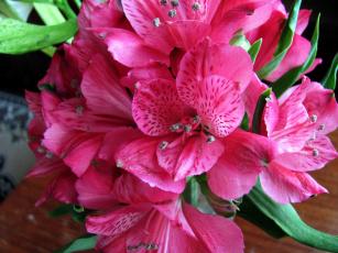 обоя цветы, альстромерия, розовый