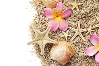 Картинка разное ракушки +кораллы +декоративные+и+spa-камни звезда морская плюмерия