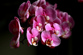 обоя цветы, орхидеи, цвет, лепестки, цветение, орхидея