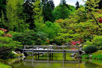 обоя природа, парк, вода, деревья, мост, камни