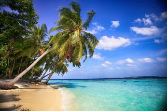 обоя природа, тропики, пальмы, красота, вода, пляж, море
