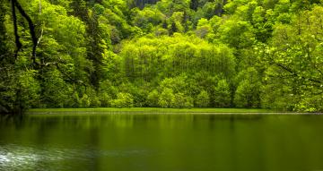 обоя природа, реки, озера, река, деревья, лес, вода, отражение, листья