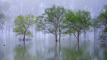 обоя природа, реки, озера, утро, туман, деревья, вода, дымка, утки, река, весна