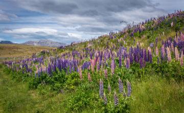 обоя природа, луга, трава, цветы, гора, холм