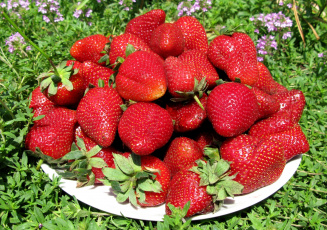 Картинка еда клубника земляника красота лето ягоды