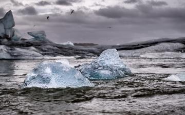 Картинка природа айсберги+и+ледники льдины море чайки айсберг шторм