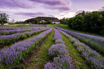 обоя цветы, лаванда, поле, валансоль, france, франция, valensole