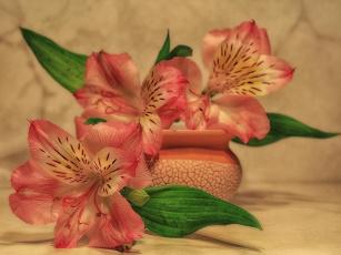 обоя цветы, альстромерия, растения, натюрморт, лето, красота, композиция