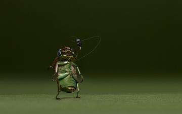 Картинка юмор приколы музыка жук