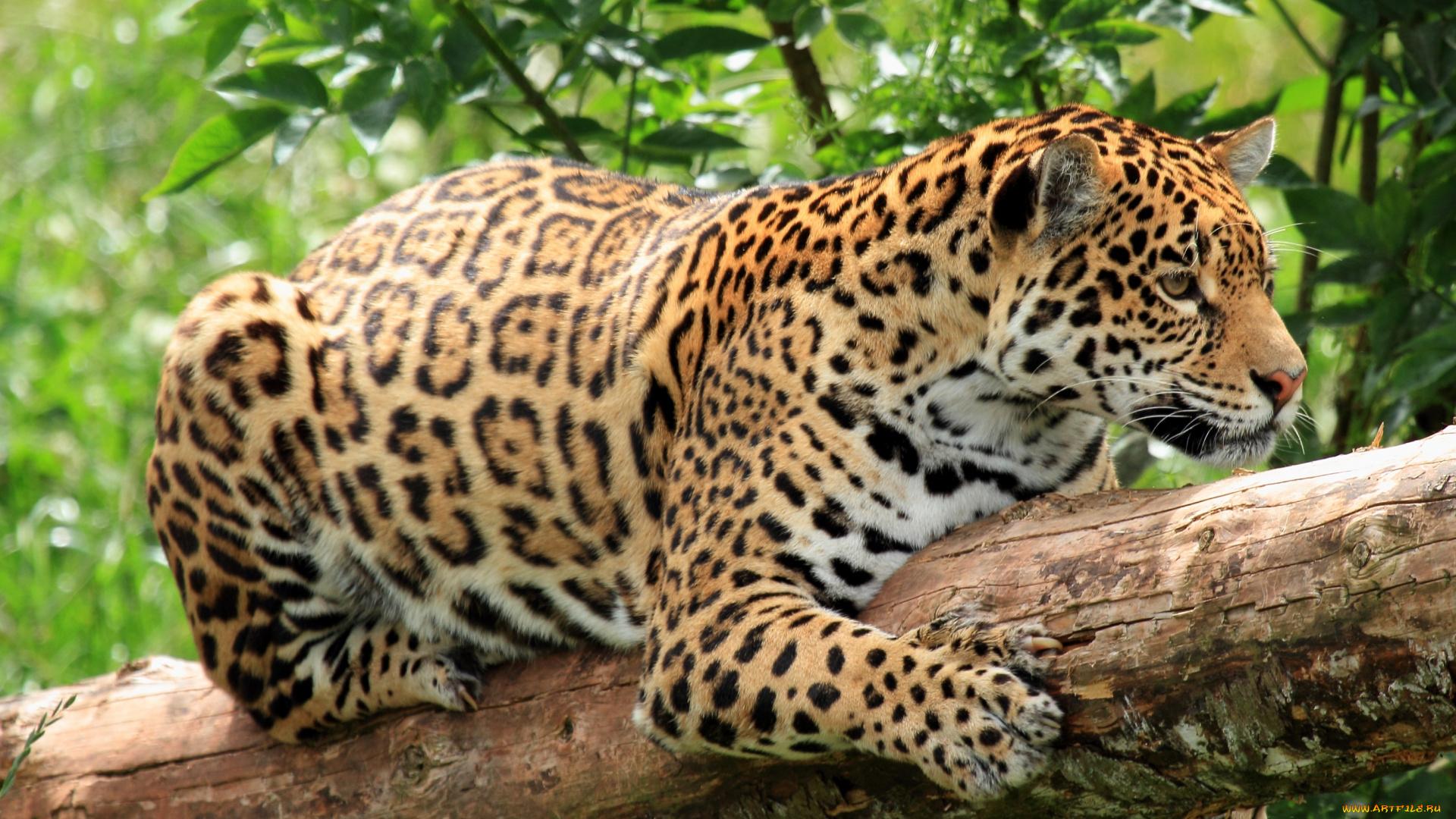средние животные тропиков фото с названиями бюджетное общеобразовательное