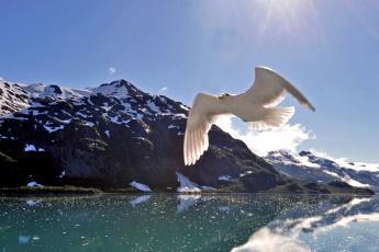 Картинка животные Чайки бакланы крачки крылья полет море горы