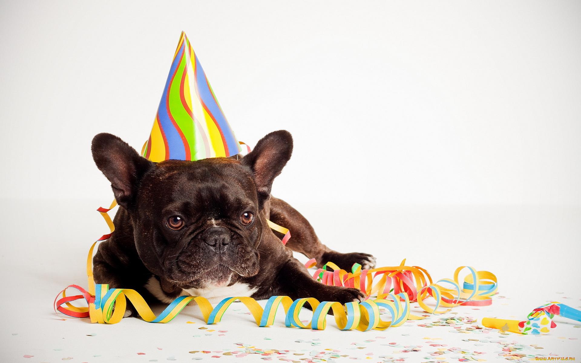 Крутые, прикольные картинки с собаками с днем рождения