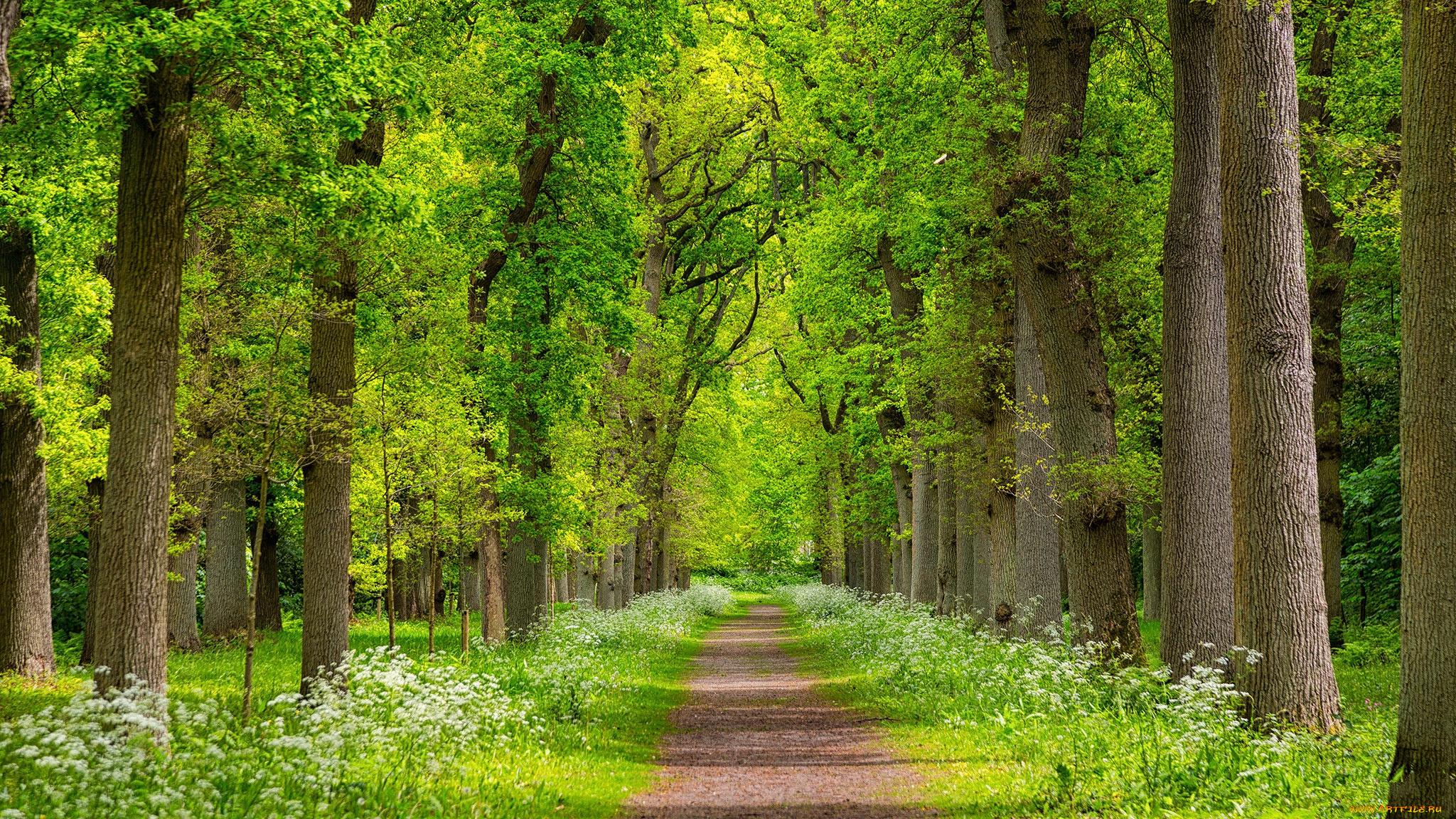 весной в лесу  № 113929 загрузить