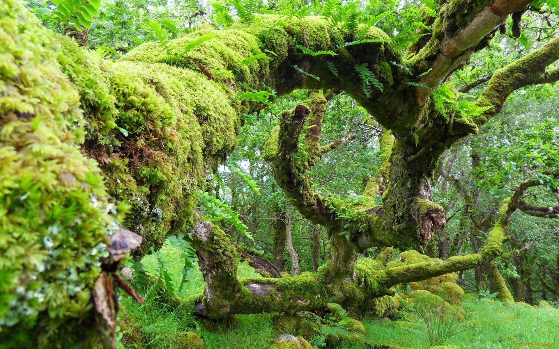 Мох на поваленном дереве бесплатно