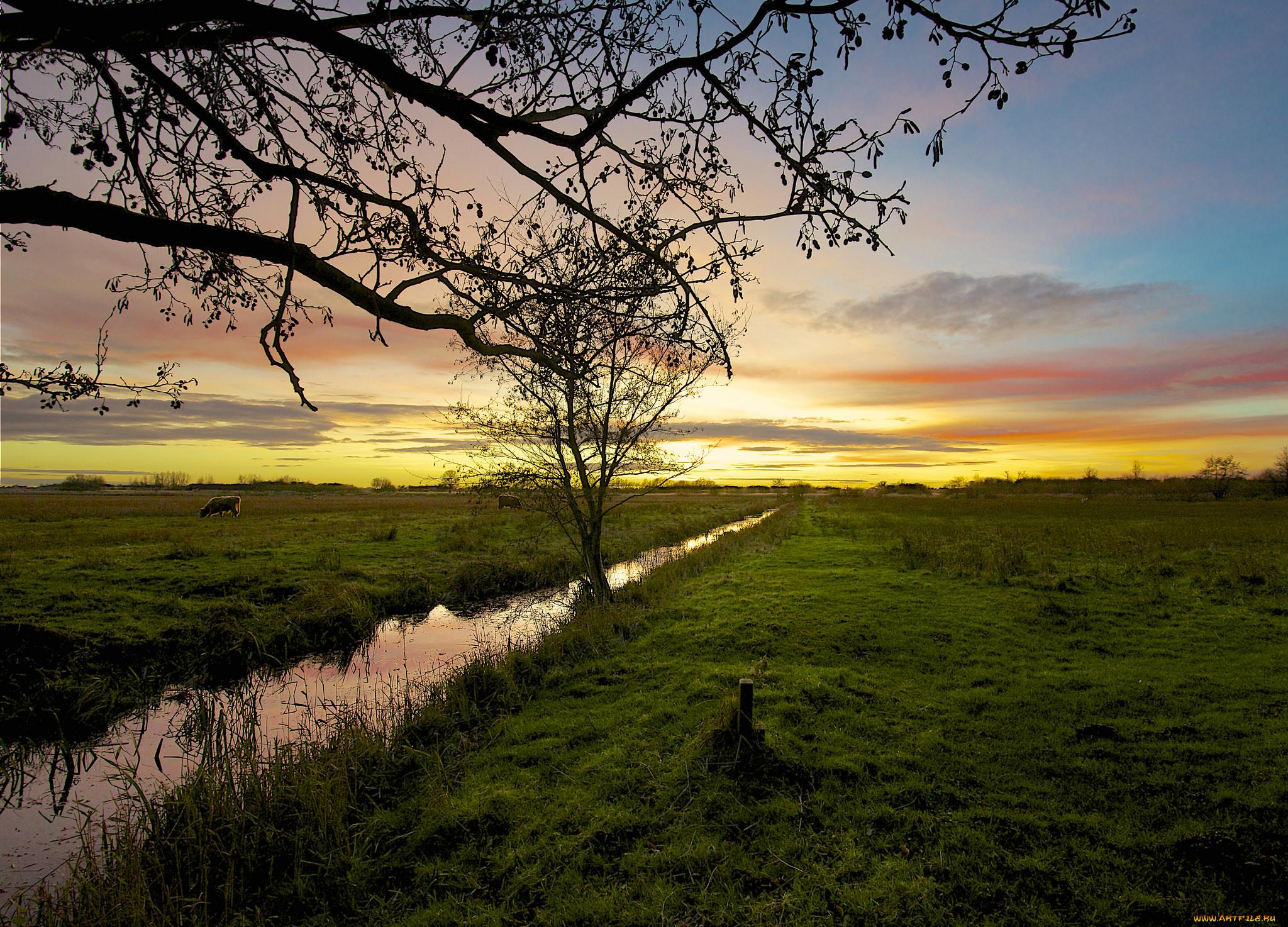 собака поле закат небо загрузить