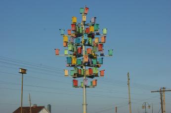 Картинка птицы тоже предпочитают жить мегаполисах юмор приколы небо скворечники столбы провода