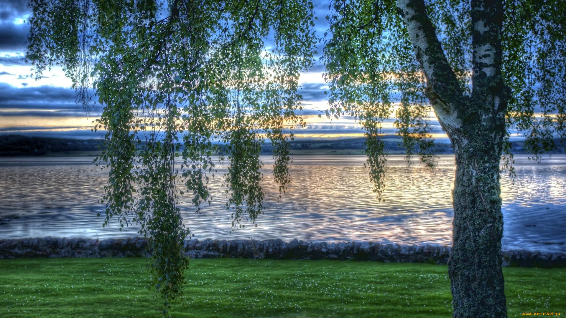 природа береза деревья вода озеро лес  № 2791979 бесплатно