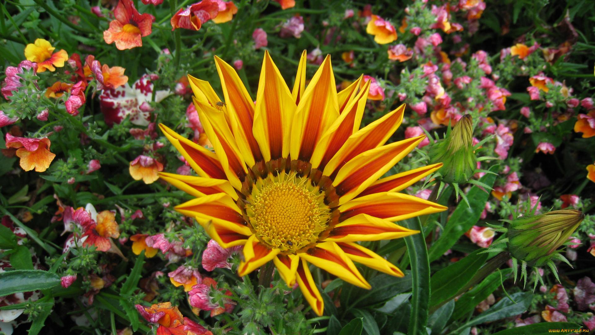 вариант садовые цветы фотографии профессионалов вот про татуху