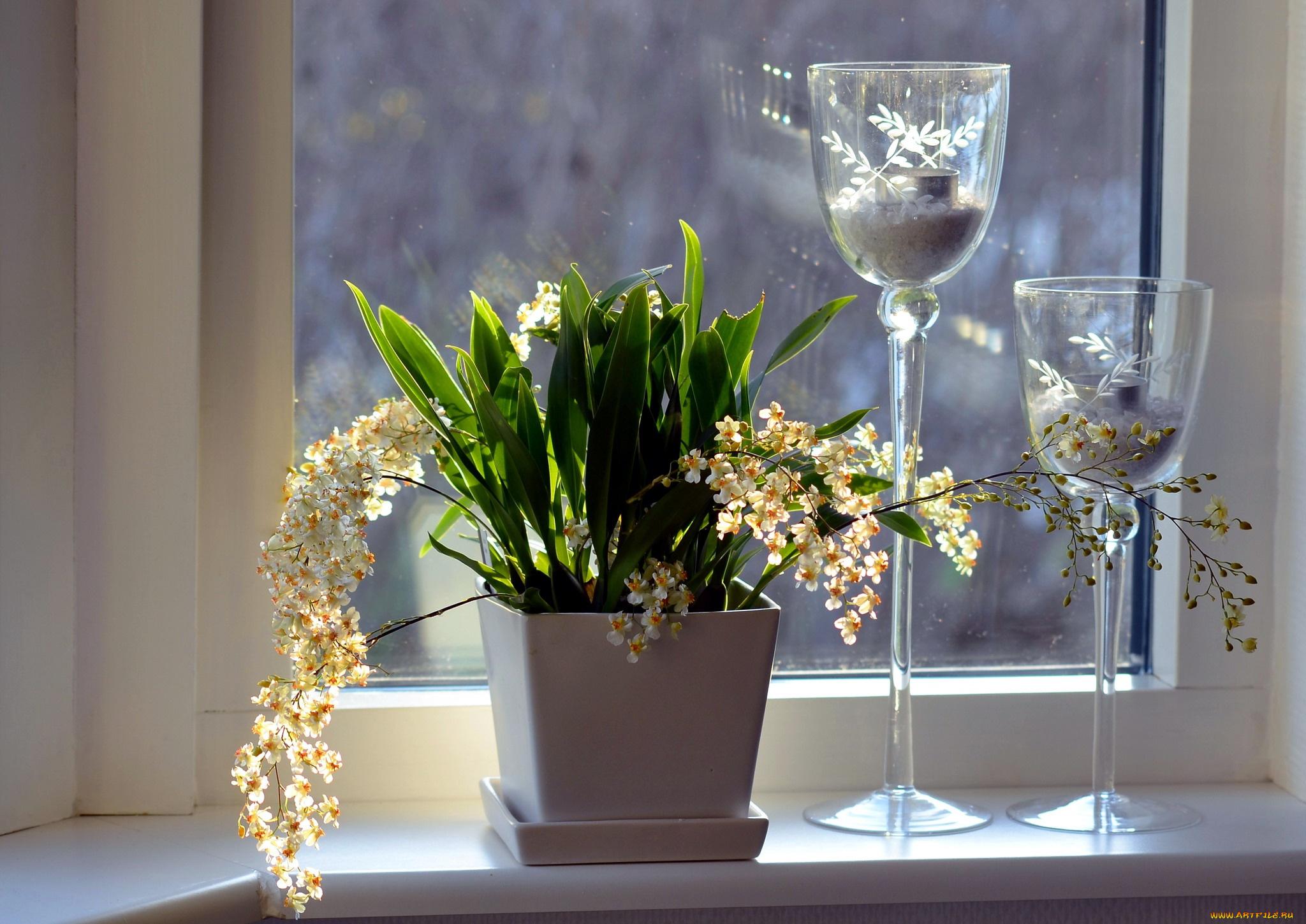 Цветы на окне в вазе загрузить