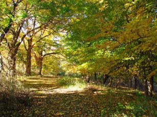 Картинка природа дороги листья ветви деревья солнечно