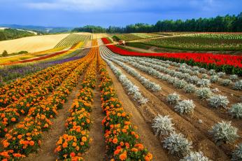 Картинка природа поля поле гряды цветы горизонт