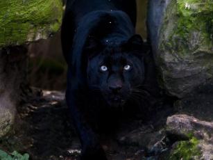 природа животные деревья пантера скачать