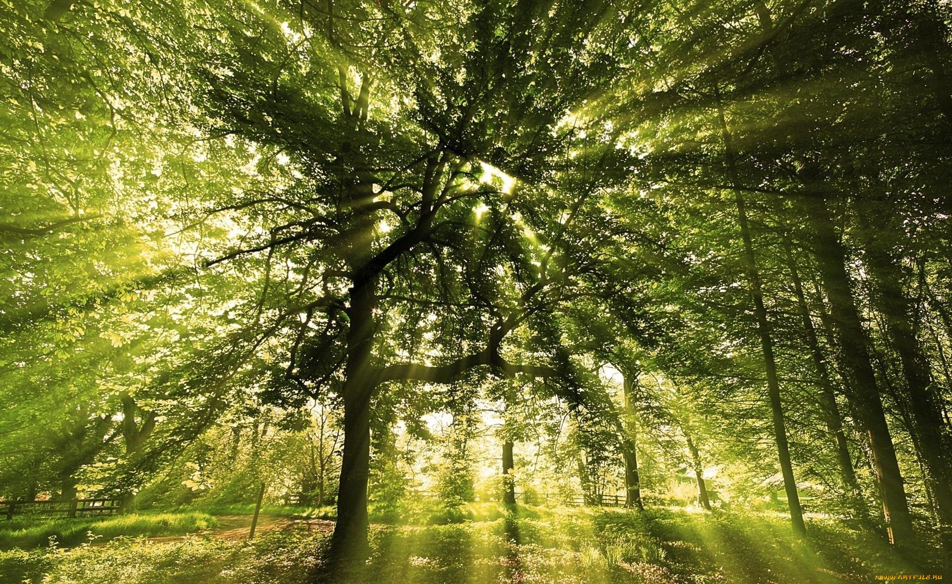 Женщине, картинки лучи солнца сквозь листву