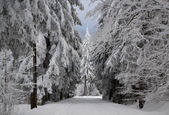 Картинка природа зима иней снег деревья лес
