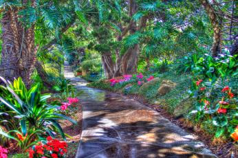 Картинка природа тропики дорога пальмы цветы