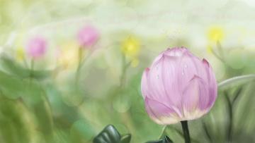 Картинка рисованное цветы листья пруд капли водяная лилия лотос