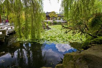 Картинка sun yat sen park vancouver chinatown канада природа парк ивы вода yat-sen