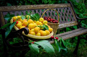 Картинка еда фрукты ягоды абрикосы черешня скамейка