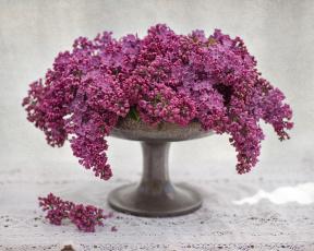 обоя цветы, сирень, гроздья, ваза