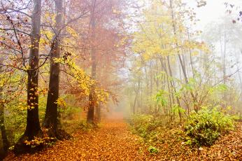 обоя природа, лес, деревья