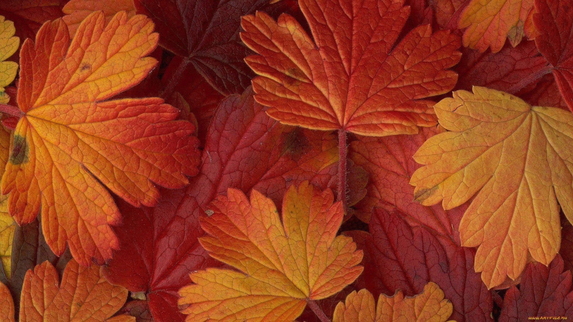 Листья осень ткань загрузить