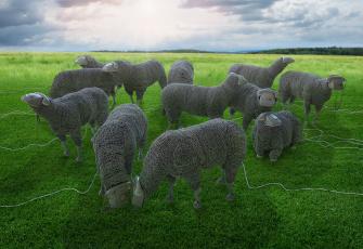Картинка юмор+и+приколы пастбище телефоны провода овцы