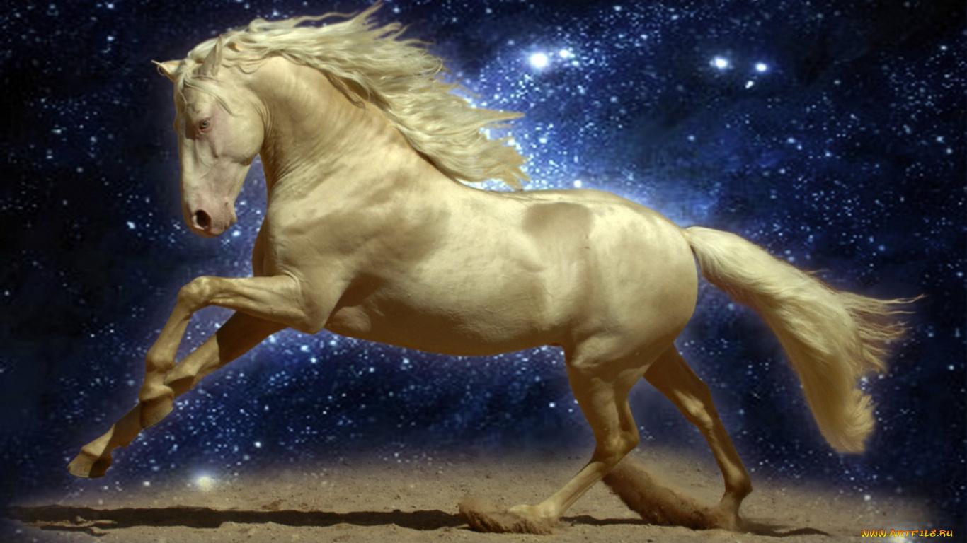 год лошади обои для рабочего стола № 528478 бесплатно