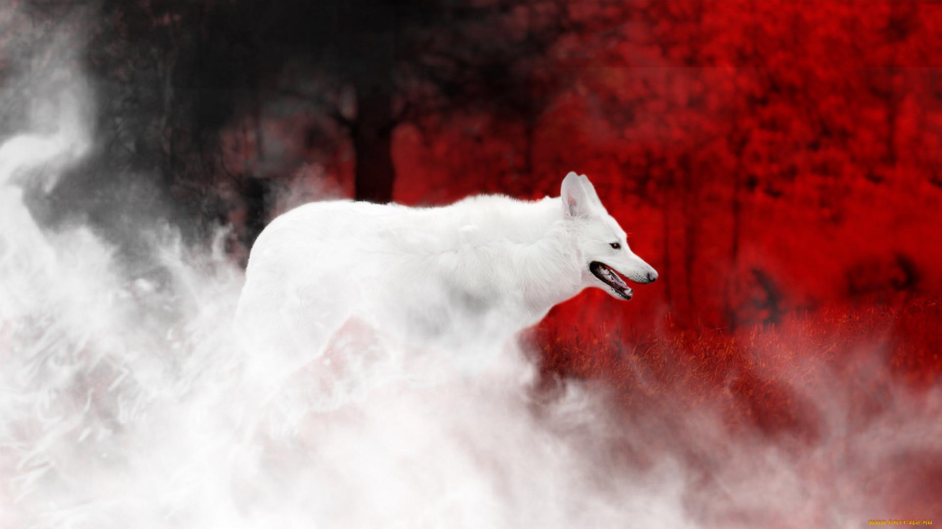 года года картинка волка из которого выходит дым для уборки