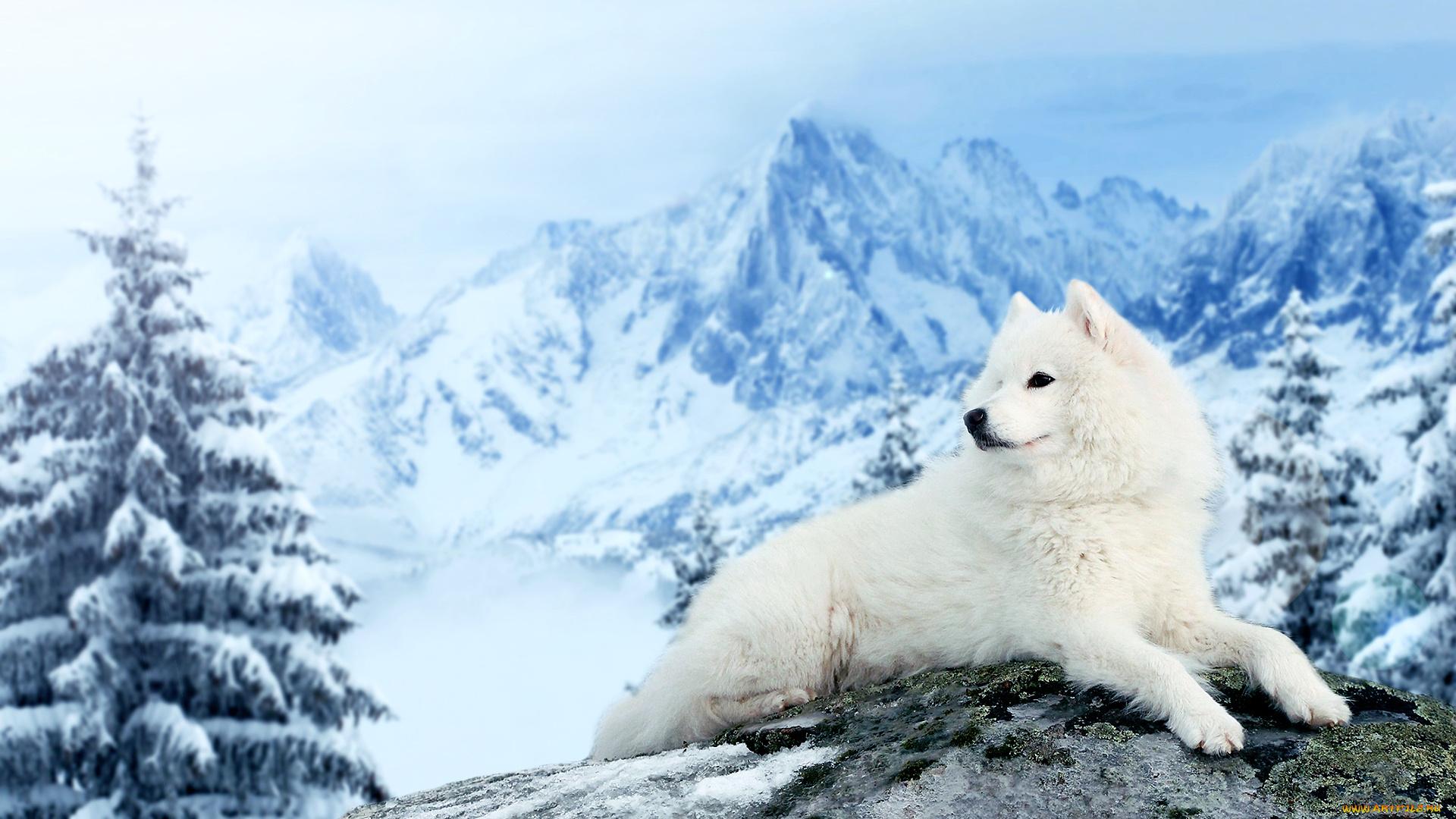природа белая собака животное улыбка  № 1423950  скачать